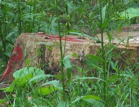 Contractor David Russell Bowen is accused of illegal logging at Coonskin Park