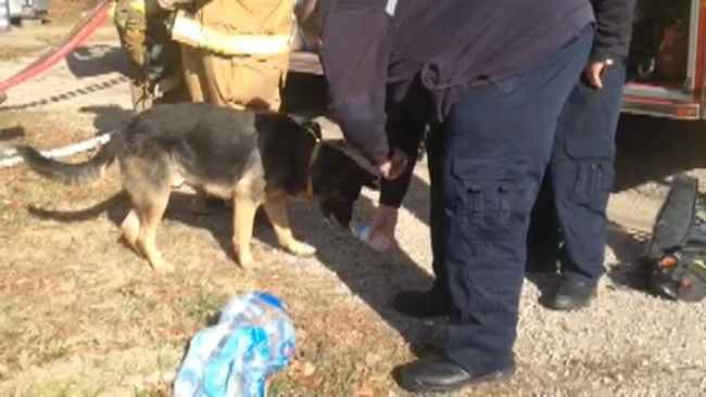 Fire fighter giving water to the homeowners' dog.