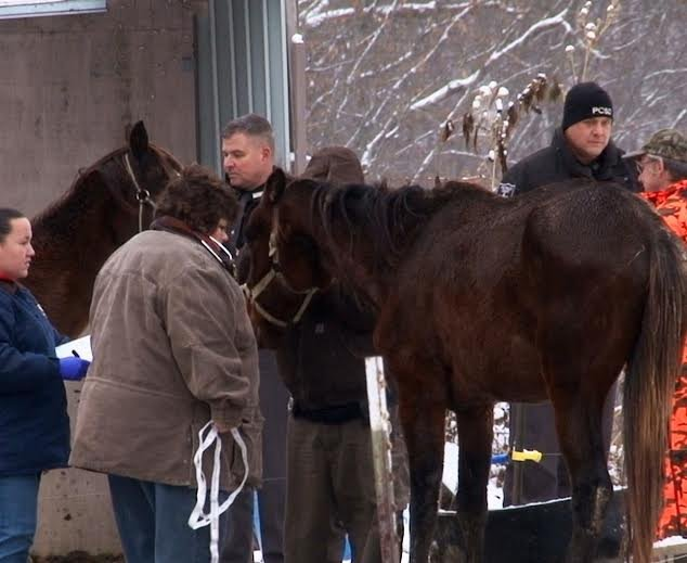 Four horses were seized in Putnam County Wednesday.