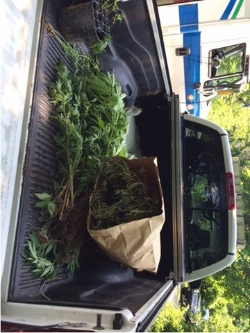 Officers with the Ashland, KY Police Department discover grow house during burglary investigation. (Ashland PD)