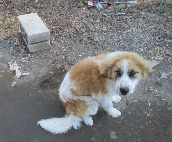 Dogs found living in deplorable conditions in Johnson County, KY. Deputies have issued warrant for owner.