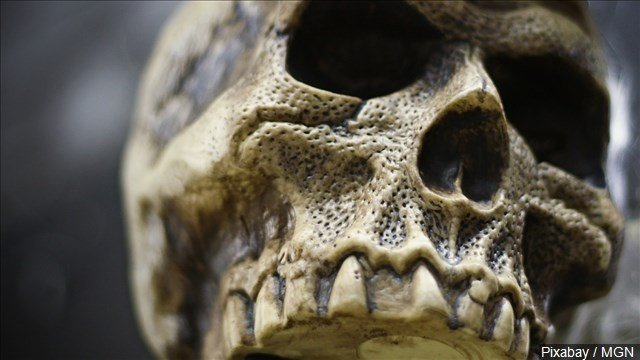 mushroom hunter finds human skeletal remains in ohio - wboy, Skeleton